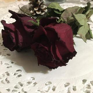 Kenya Rose エバーレッド(ドライフラワー)
