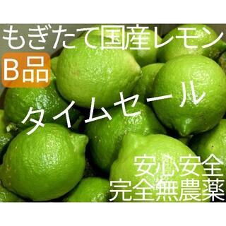 【農園直送】 完全無農薬 ノーワックス 訳あり B級品 国産レモン 無農薬レモン(フルーツ)