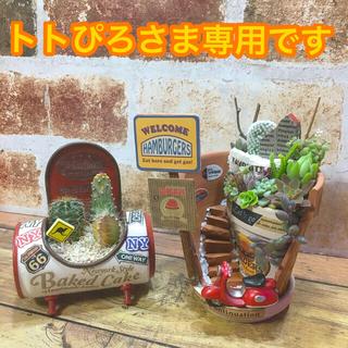 多肉植物の寄せ植え カフェ(beige)☆☆☆ちびジュース缶(赤ベージュ)(その他)