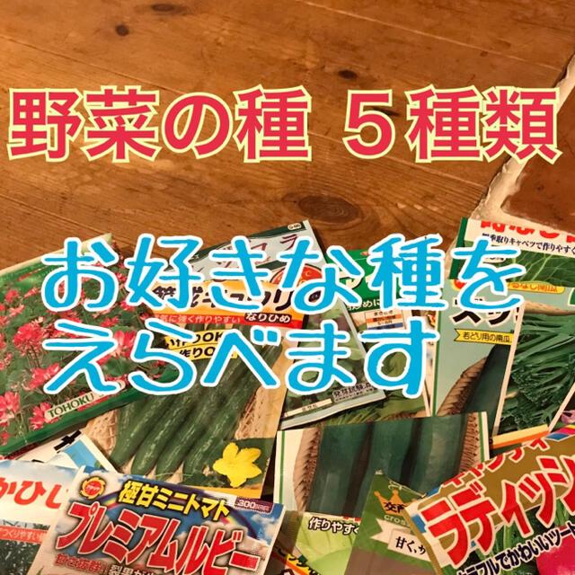 8ちゃんさん専用  野菜の種 8種類 食品/飲料/酒の食品(野菜)の商品写真