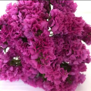 スターチスドライフラワー 赤紫⑦(ドライフラワー)