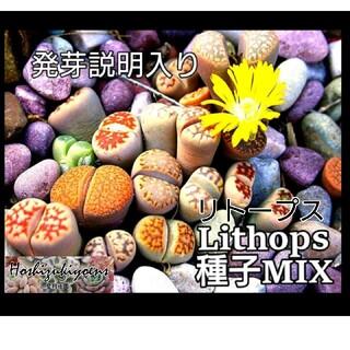 リトープス ミックス種子 20粒+α 発芽説明入り(その他)