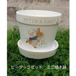 ピーターラビット ミニ植木鉢(プランター)