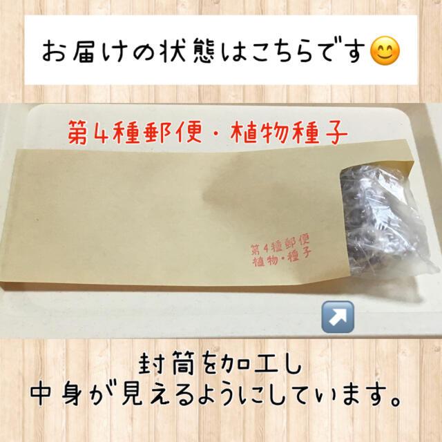 5ml 特別セール☆ベビーリーフミックスの種 野菜 種 小松菜 水菜 レタスなど 食品/飲料/酒の食品(野菜)の商品写真