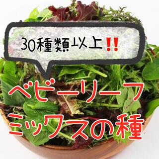 5ml 特別セール☆ベビーリーフミックスの種 野菜 種 小松菜 水菜 レタスなど(野菜)