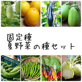 ★伝統野菜★固定種夏野菜の種セット(野菜)