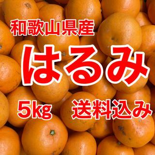 はるみオレンジ 5㎏箱に満杯 送料込み(フルーツ)