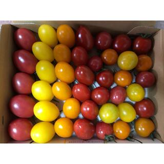 ミニトマト8種セット 1キロ(野菜)