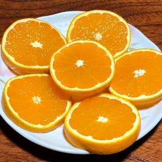 清見オレンジ 訳あり(フルーツ)