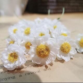 花かんざしフレッシュドライフラワー(ドライフラワー)