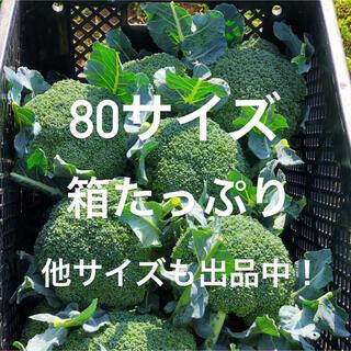 農家直送 採れたてブロッコリー 80(野菜)