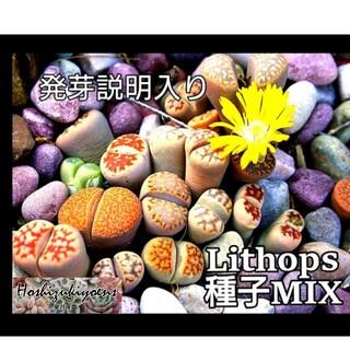 リトープス ミックス種子 25粒+α 発芽説明入り(その他)