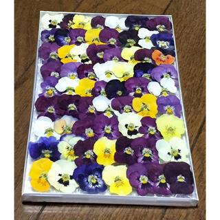 s⑦ 銀の紫陽花が作った可愛い彩りビオラのドライフラワー(ドライフラワー)