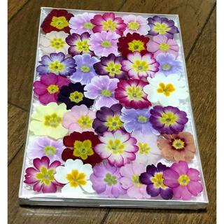 s⑩ 銀の紫陽花が作ったふんわり可愛い春色プリムラのドライフラワー‼️(ドライフラワー)