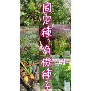 固定種 10点セット❗ 野菜の種 ハーブ 有機種子 家庭菜園 エディブルフラワー(野菜)