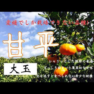 ジェミニー様専用 大玉8キロ(フルーツ)