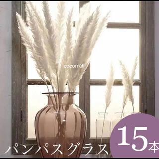 パンパスグラス ホワイト 15本(ドライフラワー)