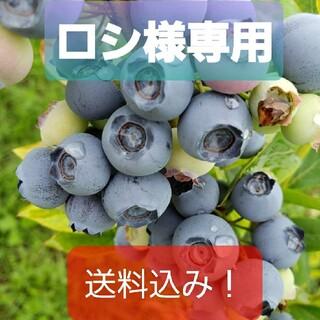 完熟冷凍ブルーベリー【中粒〜大粒】5㌔(フルーツ)