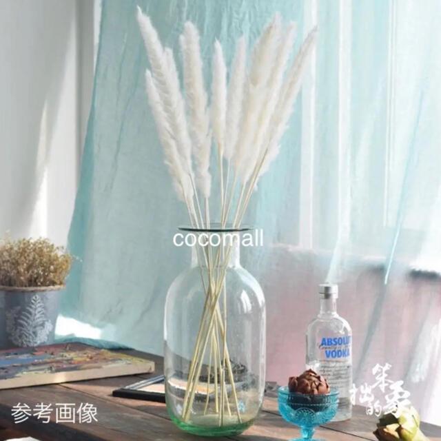 パンパスグラス ホワイト 7本 ハンドメイドのフラワー/ガーデン(ドライフラワー)の商品写真