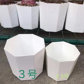 八角プラ鉢 3号 10個  白 ホワイト(その他)