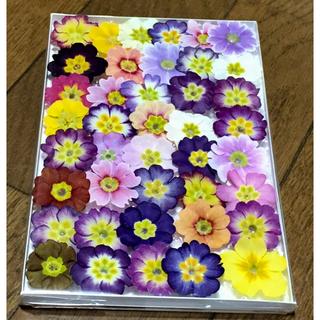 s⑨  銀の紫陽花が作ったふんわり可愛い春色プリムラのドライフラワー(ドライフラワー)