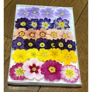 s11 銀の紫陽花が作ったふんわり可愛い春色プリムラのドライフラワー(ドライフラワー)