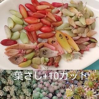 ⭐多肉植物 葉さしセット(その他)