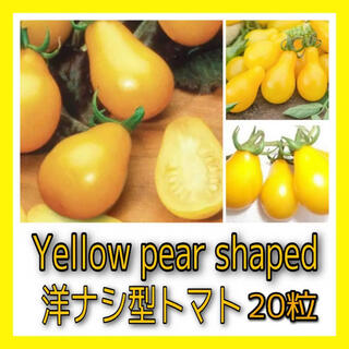 Yellow Pearshaped(洋ナシ型ミニトマト)20粒(その他)