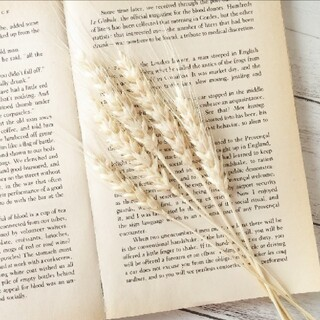 小麦   オフホワイト 5本(ドライフラワー)