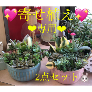 専用❤︎多肉植物❤︎寄せ植え❤︎このまま飾れます❤︎丸鉢2点セット❤︎お得♪(その他)
