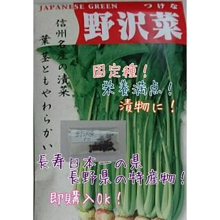 野沢菜 固定種 野菜の種 ハーブの種 水耕栽培 家庭菜園(野菜)