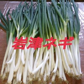 岩津ネギ2キロ(M.MMサイズ)(野菜)
