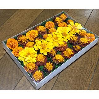 銀の紫陽花が作ったマリーゴールドのドライフラワーです(ドライフラワー)