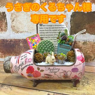 多肉植物の寄せ植え コーヒーボトルリメ缶(その他)