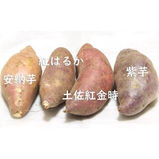 【さつまいも★3キロ★バラエティーパック】 #さつまいも #さつま芋 #薩摩芋(野菜)