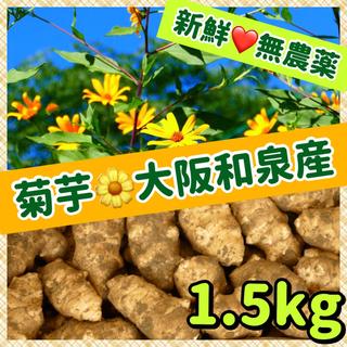 【特選】❤️新鮮そのもの・無農薬・自然栽培『こがね菊芋』(白菊芋)(野菜)