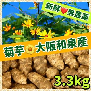 【特選】❤️新鮮そのもの・自然栽培『こがね菊芋(白菊芋)』〜大阪和泉産(野菜)