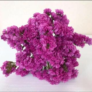 スターチスドライフラワー 赤紫(ドライフラワー)