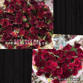 mignon様専用★ミニミニ薔薇20輪+2輪付&開花20輪+5輪付き★ミニ薔薇(ドライフラワー)