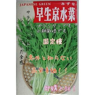 サラダ用早生京水菜 固定種 野菜の種 ハーブの種 水耕栽培 家庭菜園(野菜)