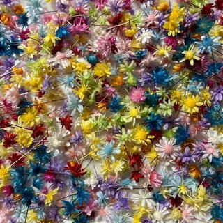 スターフラワーミニ マルセラ 14色 訳ありヘッドのみ100個 ハーバリウム(ドライフラワー)