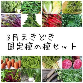 ★伝統野菜★3月からまける固定種の種セット(野菜)
