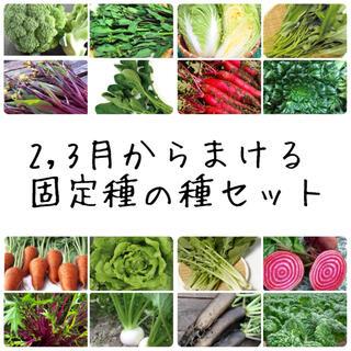 ★伝統野菜★2,3月からまける固定種の種セット(野菜)