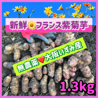 【産直特価】💜新鮮そのもの・無農薬『フランス紫菊芋』〜大阪いずみ産(野菜)