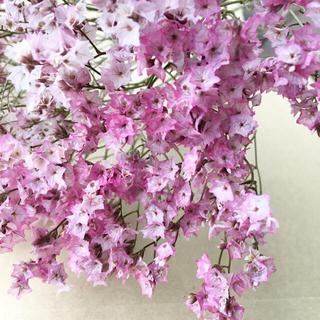 香り立つ無農薬ハイブリッドスターチス 桃色 ピンク ドライフラワー花材(ドライフラワー)