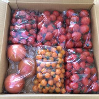 トマト食べ比べセット3キロ(野菜)