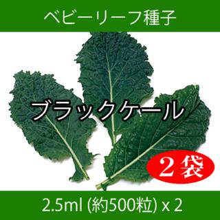 ベビーリーフ種子 B-36 ブラックケール 2.5ml 約500粒 x 2袋(野菜)