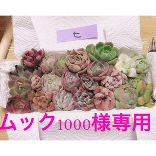 韓国ムック1000様専用 ミニ寄せ植えセット(ヒ)22種とルノーディン2個セット(その他)
