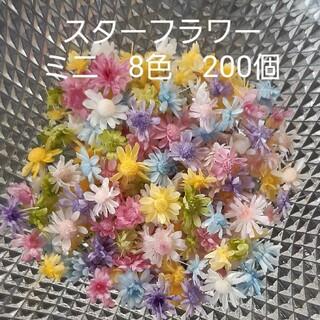 スターフラワーミニ8色 ヘッドのみ200個(ドライフラワー)