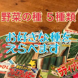 umi8910様   野菜の種 えらべる6種類(野菜)